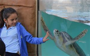 Student Observing Sea Turtle